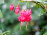 <h5>Fuchsia</h5>