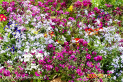 <h5>Mixed seasonal colour </h5>