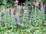 <h5>Canterbury bells & Roses</h5>