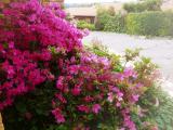 <h5>Bordeaux Small Garden</h5>