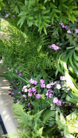 <h5>New guinea impatiens and Ferns</h5>