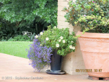 <h5>Container gardening</h5>