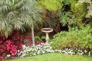 <h5>Begonia</h5>