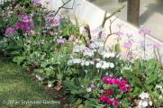 <h5>Primulas</h5>
