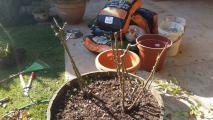 <h5>Pruning</h5>