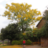 <h5>Feather Duster Tree</h5>
